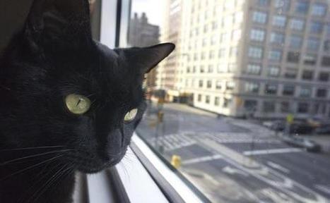 Les criminels bientôt dénoncés par leurs chats? | Les chats c'est pas que des connards | Scoop.it