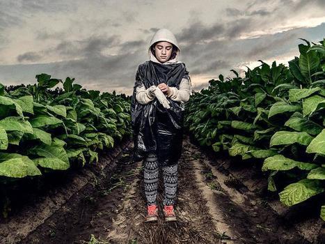 EE.UU.: Las plantaciones de tabaco no son lugar para adolescentes | Esclavitud infantil | Scoop.it