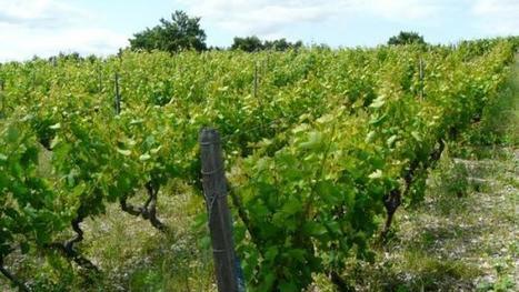 Vignes et Vignerons du Trièves,  pour la sauvegarde des vins oubliés | World Wine Web | Scoop.it