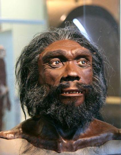 L'Homme de Denisova s'est-il hybridé avec une espèce humaine inconnue ?   Evolution de l'Homme   Scoop.it