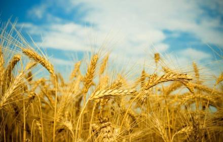 How much wheat will be fed? | agriculture.com | North Carolina Agriculture | Scoop.it