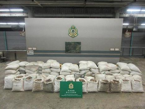 Hong Kong Customs seizes $14 million suspected pangolin scales (with photos) | Wildlife Trafficking: Who Does it? Allows it? | Scoop.it