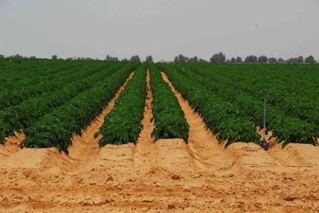 ¿Por qué el mundo agrícola debería seguir el ejemplo de Israel? | #IsraelTech | Scoop.it