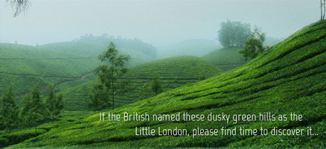 Hotels in Munnar | what is on inernet | Scoop.it