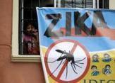 Restrictions sur les dons du sang en lien avec Zika | À la Une | Reuters | EntomoNews | Scoop.it