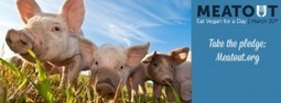Eat vegan for a day March 20 | GarryRogers Biosphere News | Scoop.it