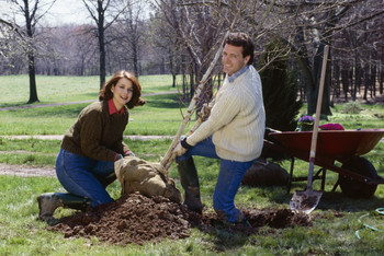 Fall is Great Time to Plant a Tree | The Miracle of Fall | Scoop.it