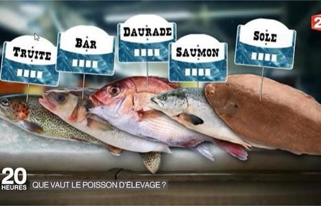 Vidéo. Faut-il avoir confiance dans le poisson d'élevage ? | Elevage | Scoop.it