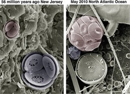 Climate change clues from tiny marine algae – ancient and modern « Descent into the Icehouse | Sustain Our Earth | Scoop.it