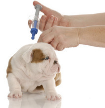 Vaccinations For Our Pets   Pets and Animals   Scoop.it