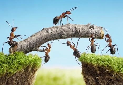 La blockchain peut-elle renverser le management traditionnel ? - Maddyness | Agilité managériale et entrepreneuriale | Scoop.it