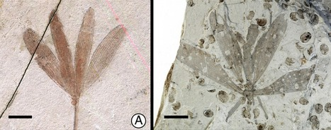 It's not a leaf - it's a bug! Insect mimicry goes back to the Jurassic | Erba Volant - Applied Plant Science | Scoop.it