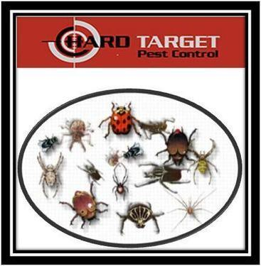 Hire professionals for bed bug control in Sydney!   Bed Bugs Pest Control Sydney   Scoop.it