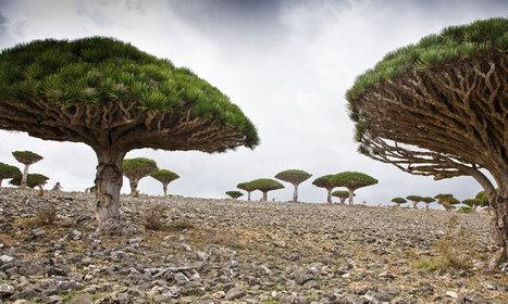 """Isolée depuis des millions d'années, l'île de Socotra abrite les paysages les plus """"extraterrestres"""" de la Terre   Le Web de Max   Scoop.it"""
