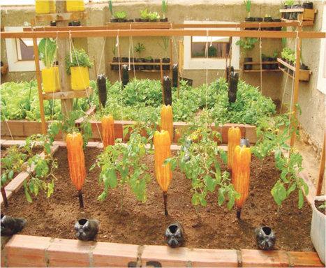 Vecinos toman interés por los huertos urbanos - Correo del Sur | Cultivos Hidropónicos | Scoop.it