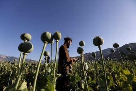 Afghanistan: la bonne récolte de pavot inquiète les Américains | Asie & Océanie | About Geopolitics | Scoop.it
