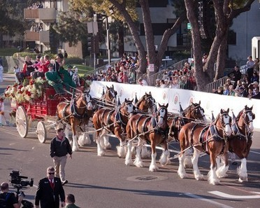 Tournament of Roses announces equestrian lineup for 2015 Rose Parade | Horse Fencing & Horse Stalls | Scoop.it