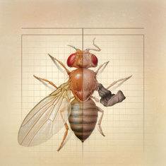 The Surprising Origins of Evolutionary Complexity | Aux origines | Scoop.it