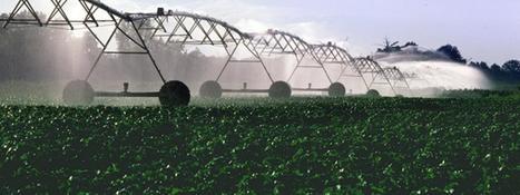 Qui sont les lipopeptides, ces biopesticides prodiges ? | Chimie verte et agroécologie | Scoop.it