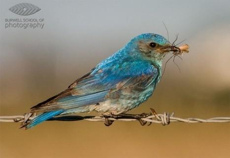 Making Sharper Wildlife Photographs - [Part 1 of 2] - Digital Photography School | Photography | Scoop.it