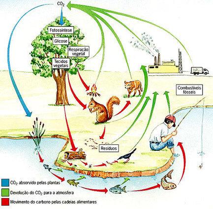 ciclo_biogeoquimicos_carb1.jpg (510x499 pixels) | Escola da Vila - Biologia | Scoop.it