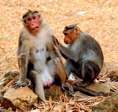 (Empathic Design) Monkeys and User Centered Design, or, On Empathy | Empathy and Compassion | Scoop.it