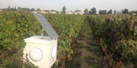 La solution au dépérissement des vignes françaises :  la diffusion d'ondes musicales | Le Vin et + encore | Scoop.it