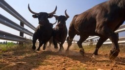 10 Causes for the Bull-Run - Shyam Advisory Blog | Shyam Advisory Blog - Shyam Brokings and Advisory solutions Ltd | Scoop.it