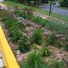 A Gathering of Rain Gardens
