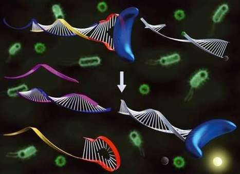 Affordable genetic diagnostic technique for target DNA analysis developed   Era del conocimiento   Scoop.it