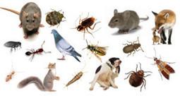 شركة مكافحة حشرات بالرياض و بالخرج 0500490114 الإختصاصي | | شركة رش مبيدات بالرياض | Scoop.it