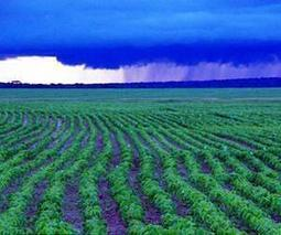 Existing cropland could feed four billion more | Sustain Our Earth | Scoop.it