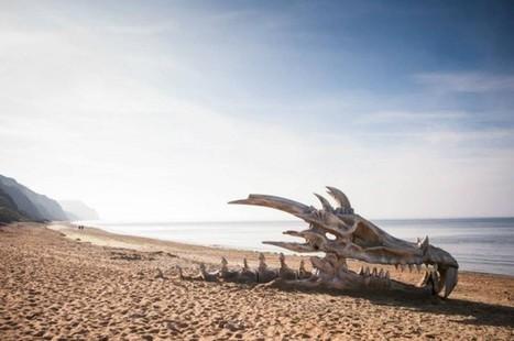 Squelette de dragon – Paperplane | TVOD_FR | Scoop.it