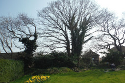Solicitor fined for cutting down tree in Warsash | QTRA | Scoop.it