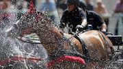 Découvrir l'univers du cheval en trois jours Le meeting Equissima  CHALET-À-GOBET | Cheval et sport | Scoop.it