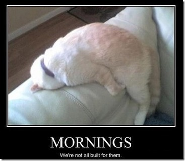 Good morning little cat | Funny Blaster | Scoop.it