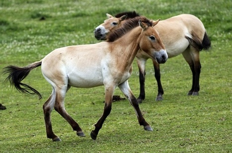 Scientists Decode Oldest Genome Ever, Prove Evolution of Horses Much Slower Than Believed | Year 12 Biology - Evolution | Scoop.it