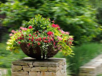 Backyard Landscaping Creative ideas for Multipurpose Plants | Gardening | Scoop.it