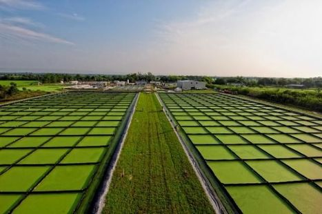 SAUDI ARABIA: BASF and NPC join forces to cooperate on algae technology | Oumelkheir | Scoop.it