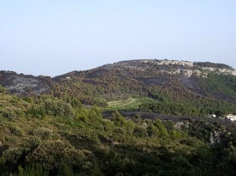 Ecodiari: L'extracció de fusta a Mariola causa un impacte forestal greu | Diari de la xarxa | Scoop.it