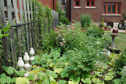 """Cleaning the urban environment with """"sustainable backyards"""" 
