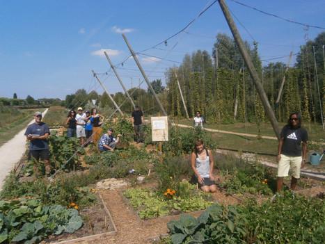 Agriculture urbaine : comment les jardins étudiants fleurissent aux abords des résidences universitaires   Damien CADOUX   Scoop.it
