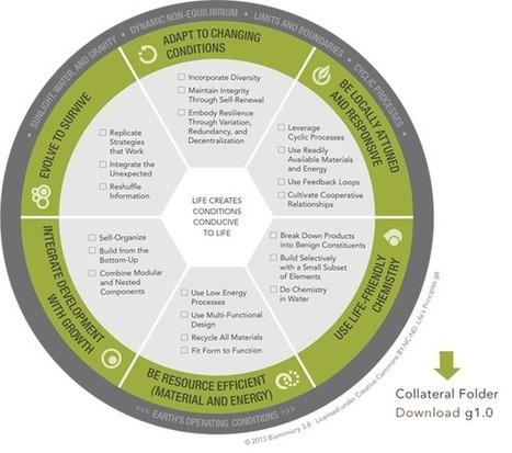 Life's Principles :: Biomimicry 3.8 | Erba Volant - Applied Plant Science | Scoop.it