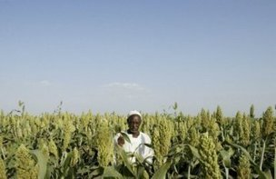 Sudan seeks to boost wheat plantations to cut imports - Sudan Tribune | Food and Drink multinationals | Scoop.it