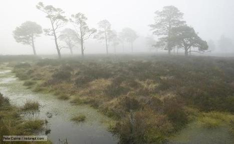 BBC Nature - Bog videos, news and facts | Bog Biome | Scoop.it