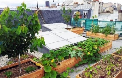 Île-de-France: «Ville et nature ne s'opposent pas forcément» | Biodiversité | Scoop.it