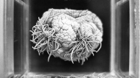 Sleeping Actually Keeps Your Brain From Growing Junk | Neurogenesis and education | Scoop.it