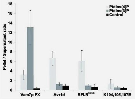 MPMI: Deletion of the Phytophthora sojae avirulence gene Avr1d causes gain of virulence on Rps1d (2013) | Host-pathogen interaction | Scoop.it