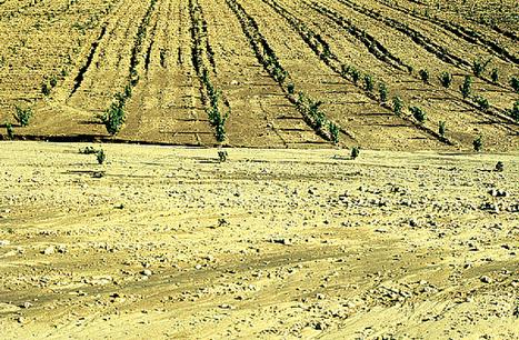 AGE - Temas - España ante la amenaza de la desertificación | ciencias sociales 1G | Scoop.it