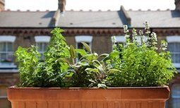 'Grow three herbs and build up' – the millennial's guide to gardening | OrganicNews | Scoop.it